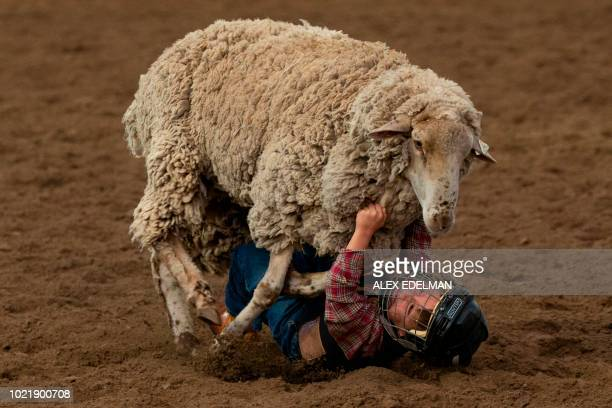 TOPSHOT A boy participates in mutton bustin' as he rides a sheep at the Snowmass Rodeo on August 22 in Snowmass Colorado The Snowmass rodeo is on its...