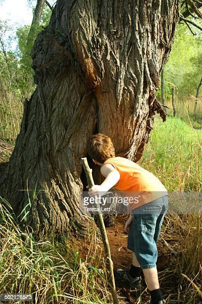 Boy peeking in tree