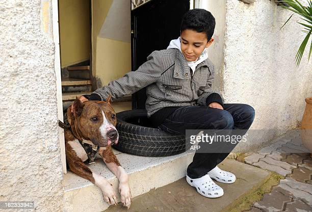 A boy pets a Pit Bull terrier lying on the front step of the owners home on January 30 2012 in the Moroccan city of Fez Morocco is looking to pass...