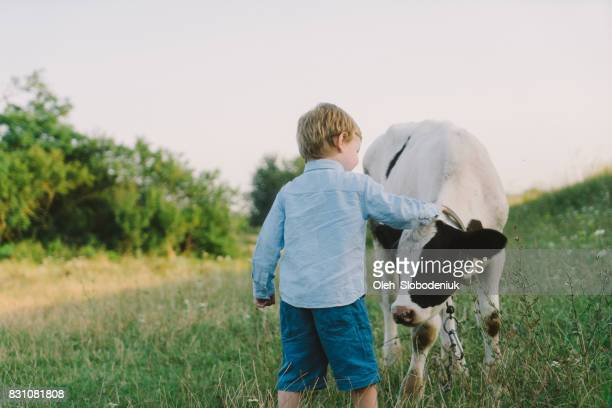 Boy petting calf on the meadow