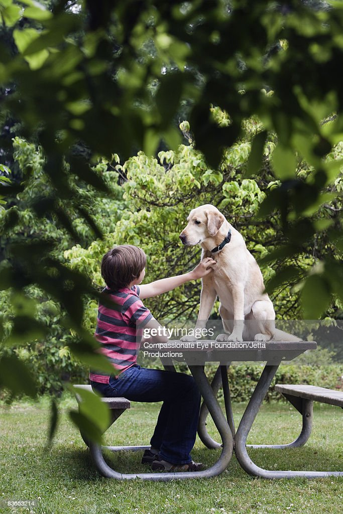 Boy petting dog sitting on a picnic table : Stock Photo
