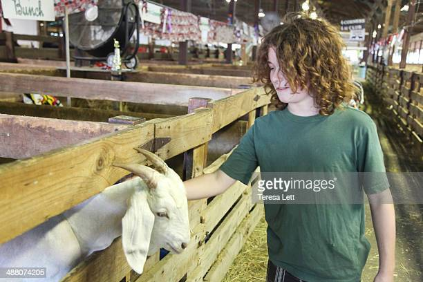 Boy petting goat