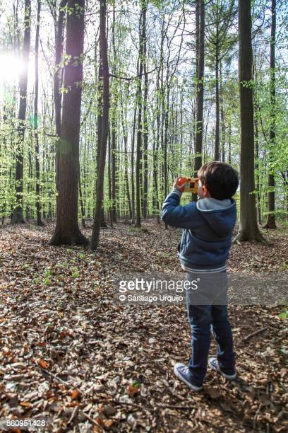 Boy photographing a beech forest