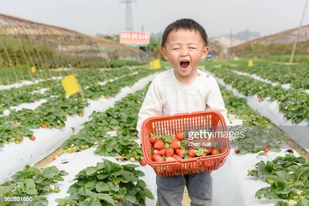 boy pick strawberries