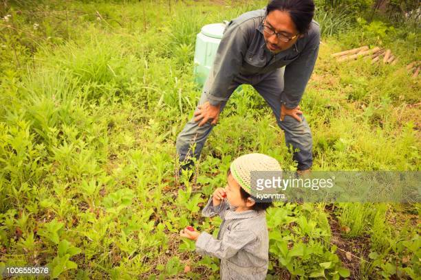 boy pick strawberry - kyonntra stock pictures, royalty-free photos & images