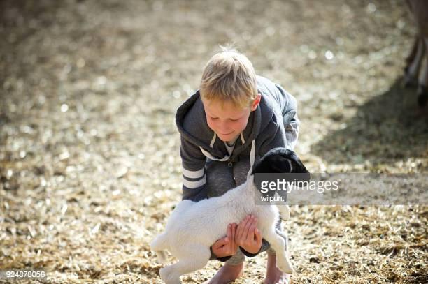 Boy Picking a Lamb Up