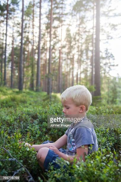 Boy picking blueberries