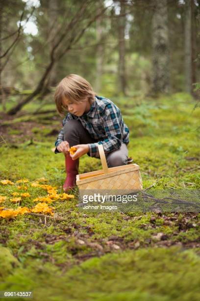 Boy picking mushrooms in forest