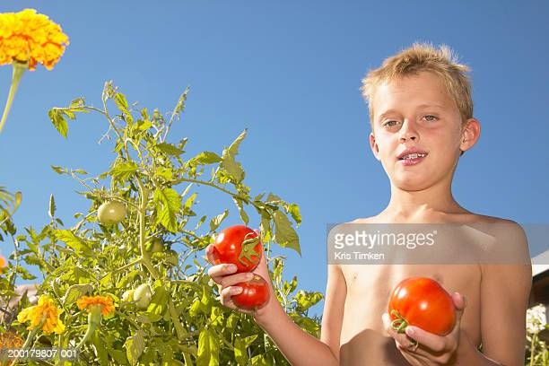 Boy (8-10) picking tomatoes in garden, portrait