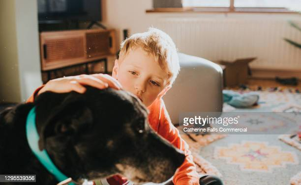 boy places his hand on dog's head in a domestic room - support stock pictures, royalty-free photos & images