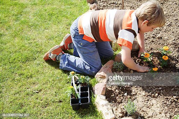 boy (8-9 years) planting seedlings in garden, elevated view - 8 9 years stock pictures, royalty-free photos & images