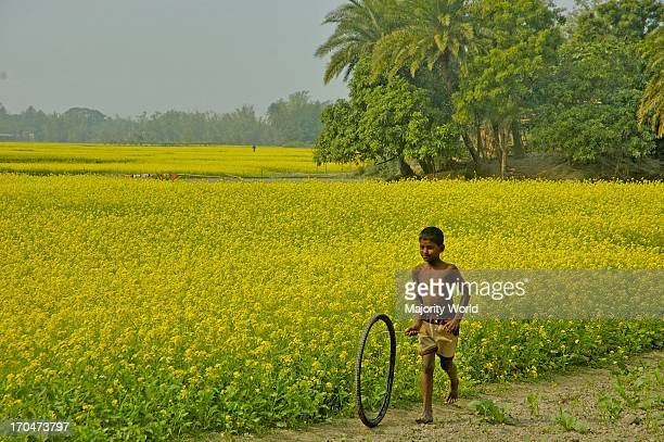 A boy playing by a mustard field on a winter morning Singair Manikganj Bangladesh December 25 2007