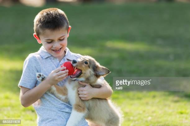 Boy playing fetch with sheltie puppy in park
