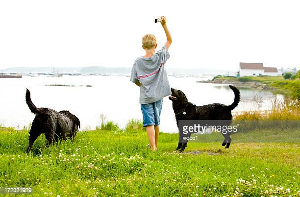 Boy playing fetch with two dogs