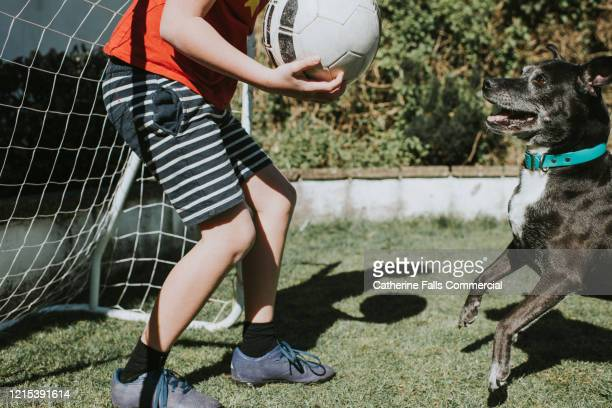 boy playing football with his dog. - football league stock pictures, royalty-free photos & images