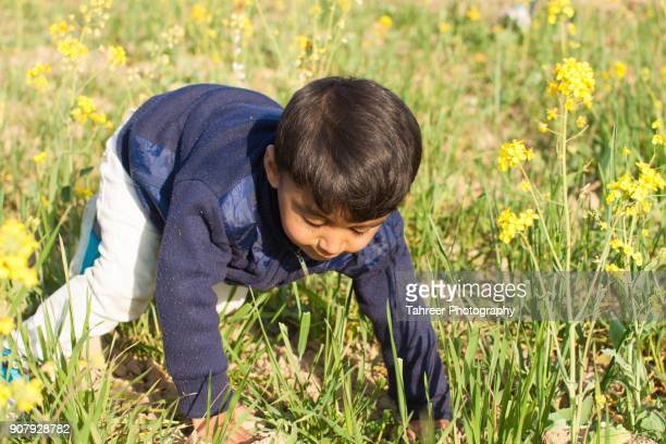 A boy playing in wheat and mustard field
