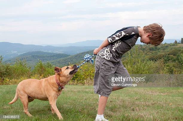 boy playing tug of war with dog - dogs tug of war stock pictures, royalty-free photos & images