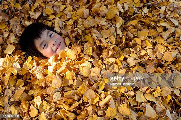 boy playing with autumn leaves - radicella imagens e fotografias de stock