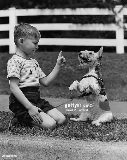 boy playing with dog - pawed mammal stock pictures, royalty-free photos & images
