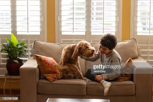 junge spielt mit goldendoodle zu hause - goldendoodle stock-fotos und bilder