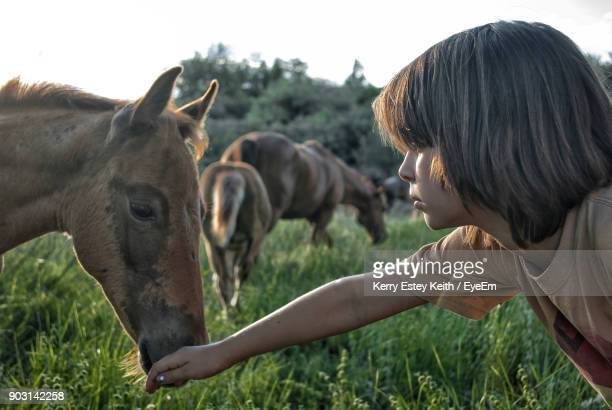boy playing with horse on field - kerry estey keith stock photos and pictures