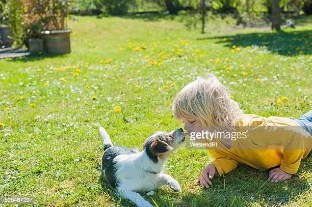 boy playing with jack russel terrier puppy in garden - da cintura para cima imagens e fotografias de stock