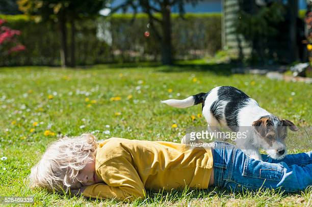 boy playing with jack russel terrier puppy in garden - lying on front stock pictures, royalty-free photos & images