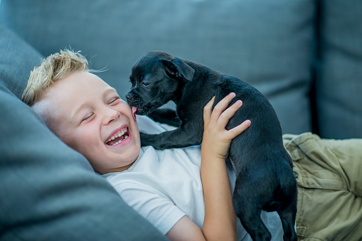 Boy playing with puppy 1067540356