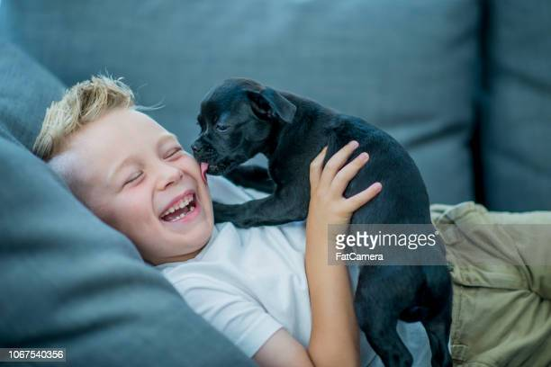 boy playing with puppy - puppy stock pictures, royalty-free photos & images