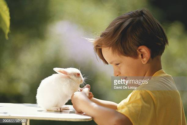 Boy (6-9) playing with rabbit