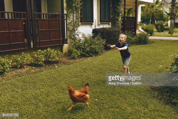 Boy Playing With Rooster On Field At Yard