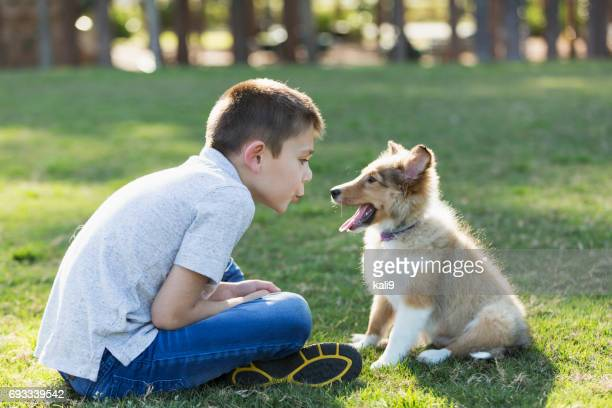 boy playing with sheltie puppy in park - collie stock photos and pictures