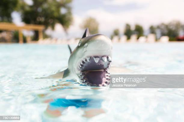 Boy (6-7) playing with toy shark in swimming pool