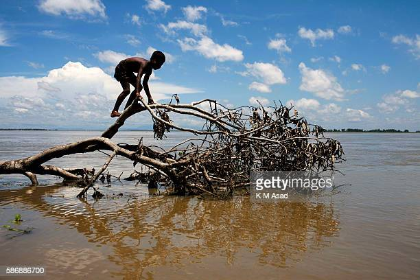 GAIDANDHA DHAKA BANGLADESH Boy plays with a broken tree after being affected by floodwater almost 15days this area in Gaibandha Bangladesh has been...