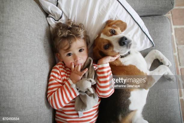 a boy posing with his dog, a beagle - alleen jongens stockfoto's en -beelden