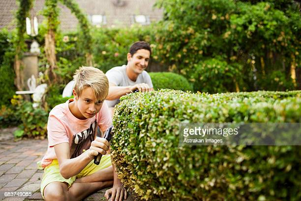 Boy pruning plant with father gardening in background