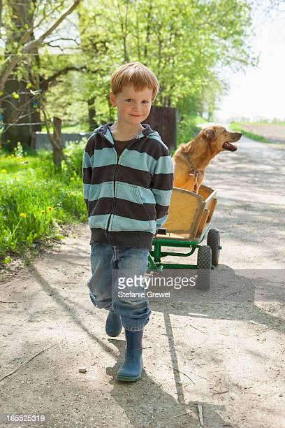boy pulling cart with dog - stefanie grewel stock-fotos und bilder