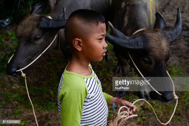 A boy pulls a buffalo during Water Buffalo Racing Festival in Chonburi province Thailand July 16 2017