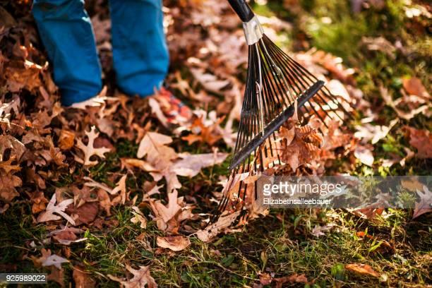 boy raking autumn leaves - rake stock pictures, royalty-free photos & images
