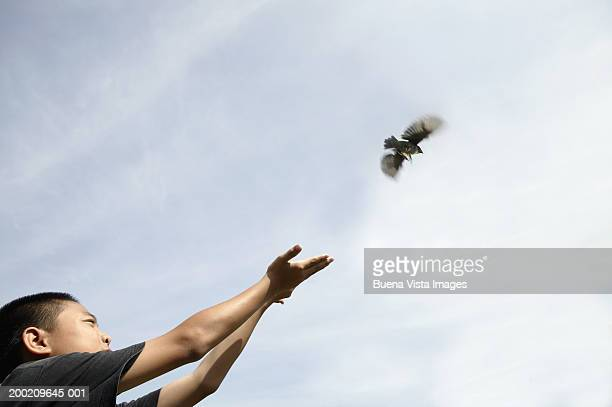 Boy (10-12) releasing bird from hands, low angle view