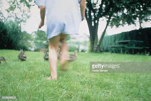 Boy running after ducks on meadow