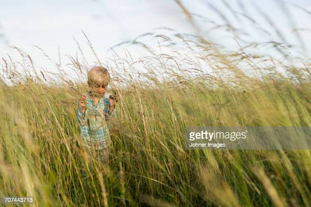 boy running in field - innocence stock pictures, royalty-free photos & images