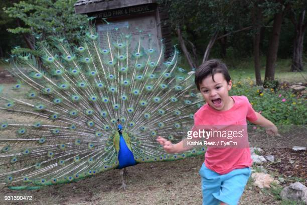 boy running on field with peacock in background - peacock stock pictures, royalty-free photos & images