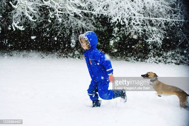 boy running through the snow with his dog - whippet stock pictures, royalty-free photos & images