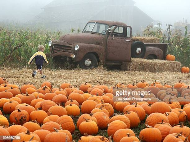 boy running to rusted old truck in pumpkin patch - pumpkin patch stock photos and pictures