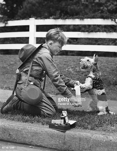 boy scout dressing injured dog - pawed mammal stock pictures, royalty-free photos & images