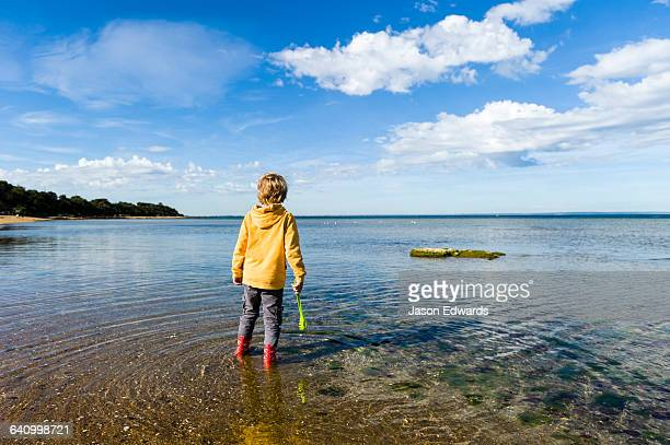 A boy searches for plants and animals in the shallows on a school excursion to the beach.