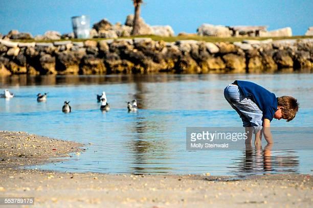 A boy searches the water at Matheson Hammock Park and Marina Florida