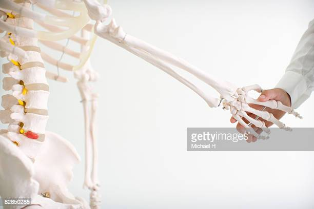 a boy shakes hands with human skeleton - funny skeleton stock photos and pictures