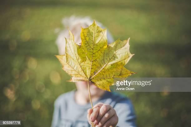 Boy Showing A Large Fall Leaf